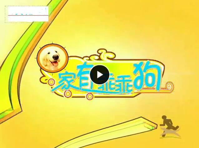 绝密训犬_家有乖乖狗(20碟)