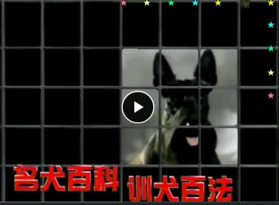套训狗教程:名犬百科与训犬百法(5碟)