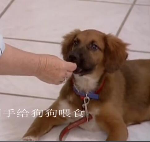 套训狗教程:聪明狗狗训练课(3碟)